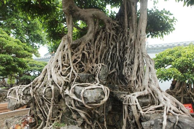 Vườn sanh cổ xứ Huế có giá triệu USD của đại gia Vĩnh Phúc - 5