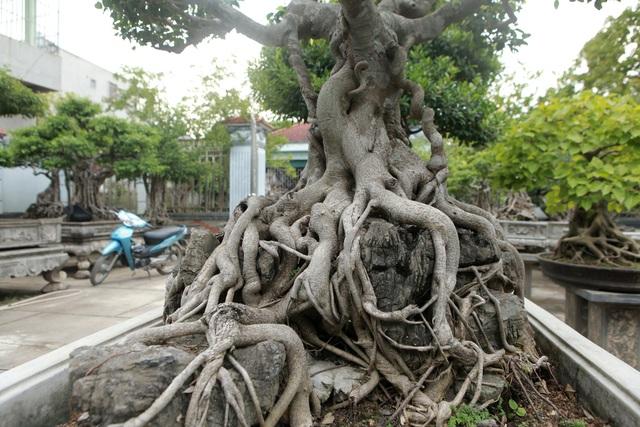 Vườn sanh cổ xứ Huế có giá triệu USD của đại gia Vĩnh Phúc - 9