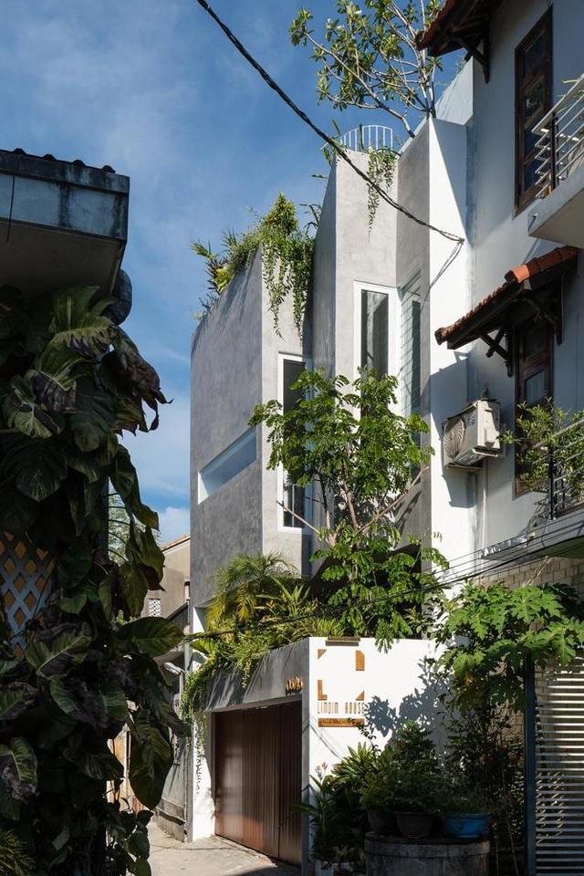 Ngôi nhà có khu vườn treo độc đáo khiến gia chủ ở nhà cả ngày không chán - 2