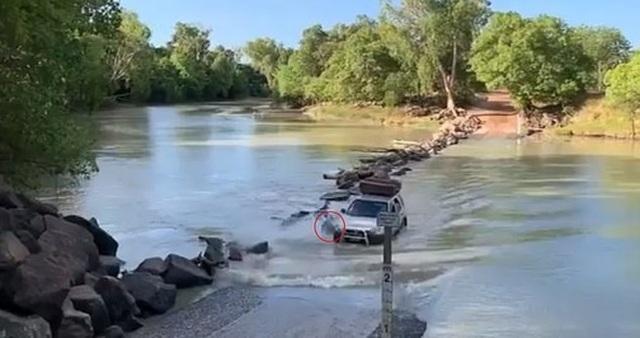 """Lái xe băng qua khúc sông """"tử thần"""", chẹt lên lưng cá sấu - 1"""