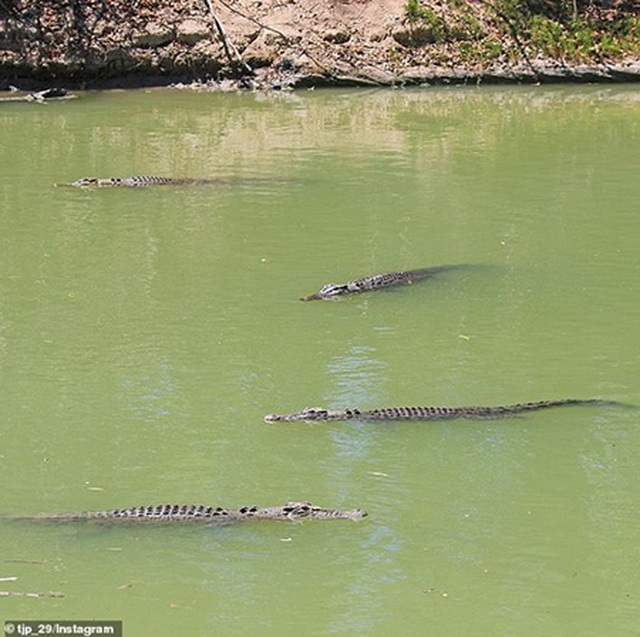 """Lái xe băng qua khúc sông """"tử thần"""", chẹt lên lưng cá sấu - 2"""