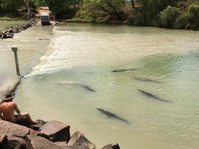 """Lái xe băng qua khúc sông """"tử thần"""", chẹt lên lưng cá sấu - 3"""