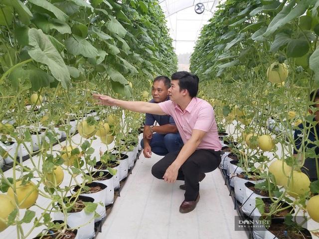 Bỏ nghề báo, chàng trai Hà Nội về quê trồng dưa lưới, mỗi năm thu hơn 2,1 tỷ đồng - 3