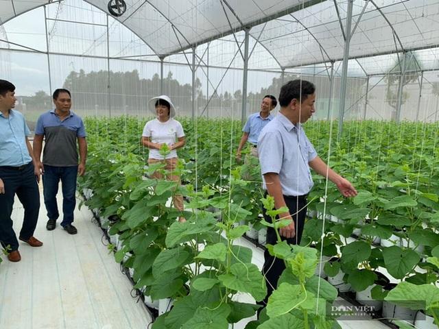 Bỏ nghề báo, chàng trai Hà Nội về quê trồng dưa lưới, mỗi năm thu hơn 2,1 tỷ đồng - 8