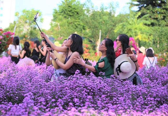 """Náo nức """"check in"""" vườn hoa thạch thảo tím """"lịm tim"""" ở Đà Nẵng - 5"""