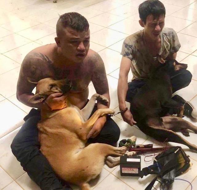 Nhóm trộm chó xịt hơi cay vào mặt người truy đuổi - 1