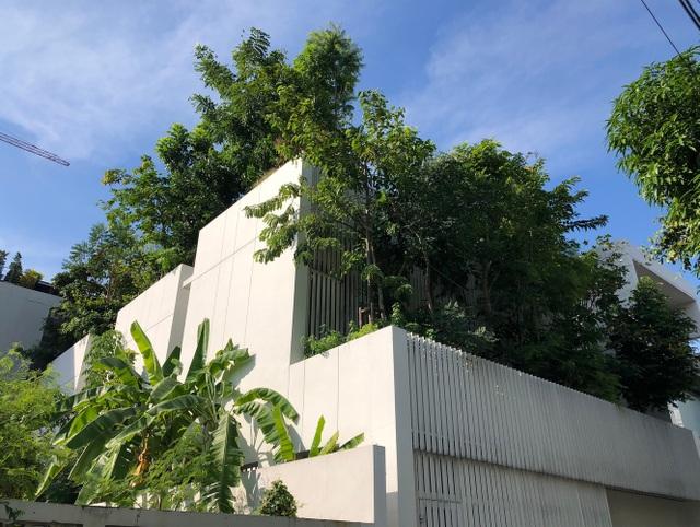 Độc đáo nhà trồng hơn 100 loại cây xanh, vào bên trong như rừng nhiệt đới - 7
