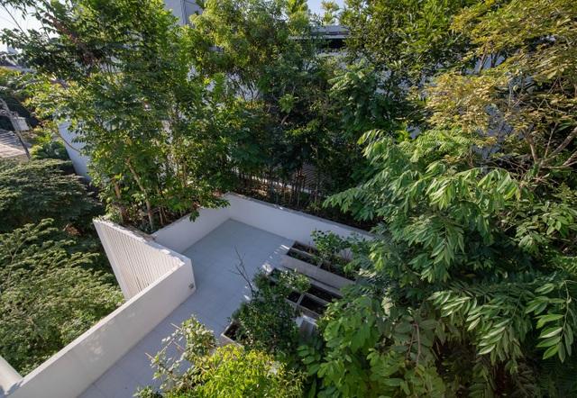Độc đáo nhà trồng hơn 100 loại cây xanh, vào bên trong như rừng nhiệt đới - 10