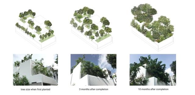 Độc đáo nhà trồng hơn 100 loại cây xanh, vào bên trong như rừng nhiệt đới - 12