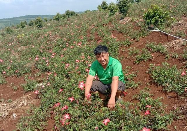 Từ phận làm thuê đến người trồng khoai lang nhiều nhất ở Đắk Nông  - 1