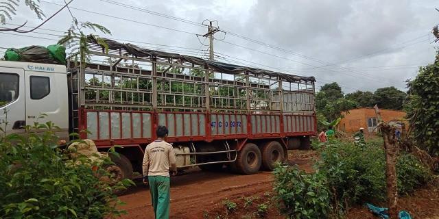 Sửa dây điện bị đứt do xe tải vướng vào, một người bị điện giật tử vong - 1