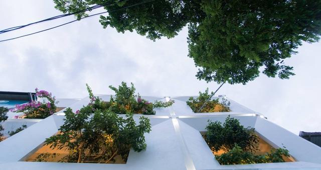 Gia đình Thanh Hóa mua 6 nhà hàng xóm, xây nhà vườn rộng 700m2 giữa phố - 3
