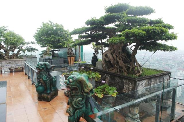 """Mãn nhãn với vườn cây bonsai dáng quái giữa """"lưng chừng trời"""" ở Hà Nội - 1"""