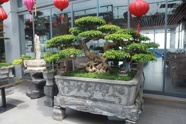 """Mãn nhãn với vườn cây bonsai dáng quái giữa """"lưng chừng trời"""" ở Hà Nội - 11"""
