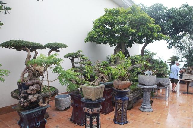 """Mãn nhãn với vườn cây bonsai dáng quái giữa """"lưng chừng trời"""" ở Hà Nội - 2"""