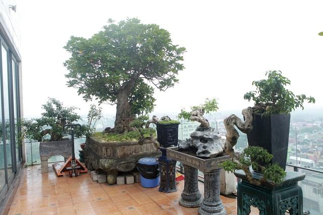 """Mãn nhãn với vườn cây bonsai dáng quái giữa """"lưng chừng trời"""" ở Hà Nội - 3"""