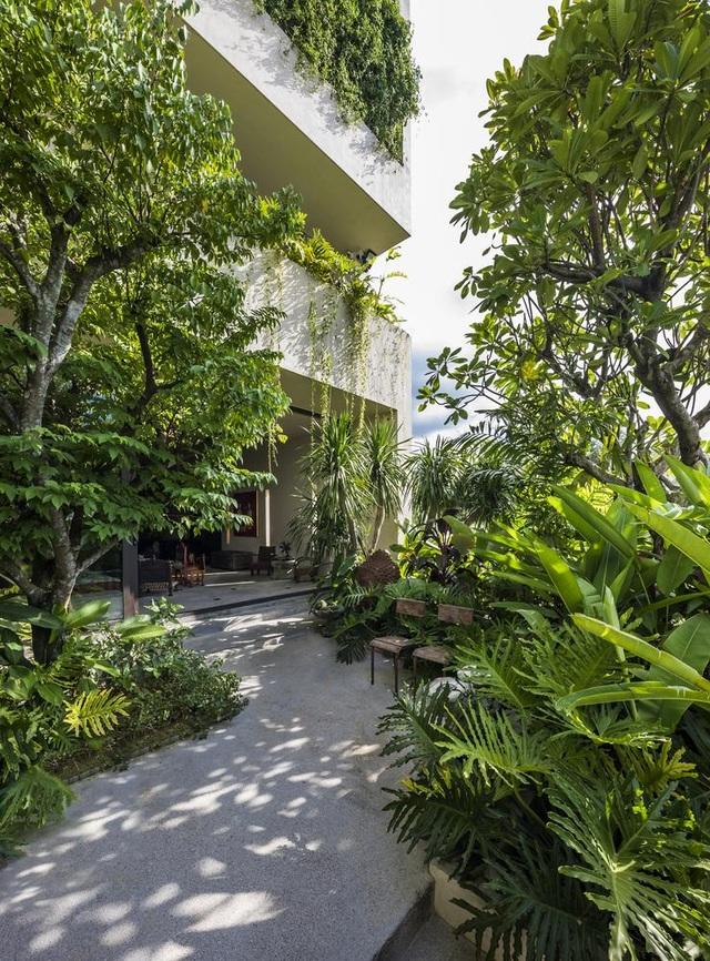 Khu vườn tuyệt đẹp ẩn trong nhà khiến chủ nhân muốn buồn cũng khó - 3