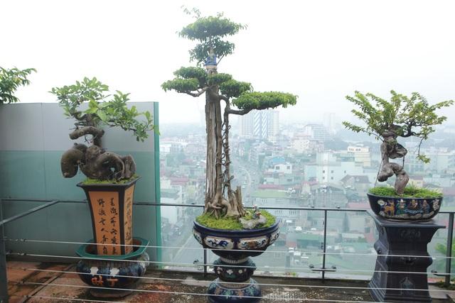 """Mãn nhãn với vườn cây bonsai dáng quái giữa """"lưng chừng trời"""" ở Hà Nội - 5"""