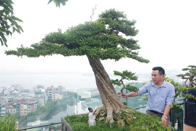 """Mãn nhãn với vườn cây bonsai dáng quái giữa """"lưng chừng trời"""" ở Hà Nội - 6"""