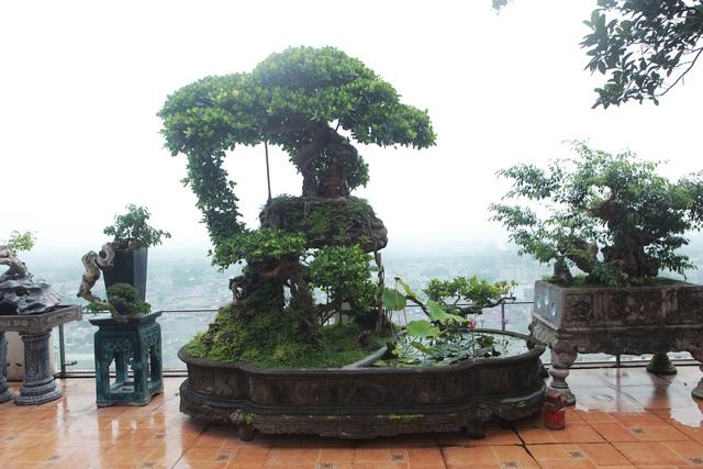 """Mãn nhãn với vườn cây bonsai dáng quái giữa """"lưng chừng trời"""" ở Hà Nội - 7"""