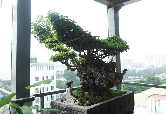 """Mãn nhãn với vườn cây bonsai dáng quái giữa """"lưng chừng trời"""" ở Hà Nội - 8"""
