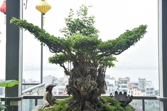 Điểm danh những cây sanh cổ khiến đại gia mê mẩn, xuống tiền không tiếc tay - 2