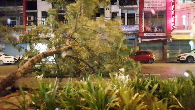 Mưa cực lớn, nước ngập ngang người, cây đổ la liệt - 11