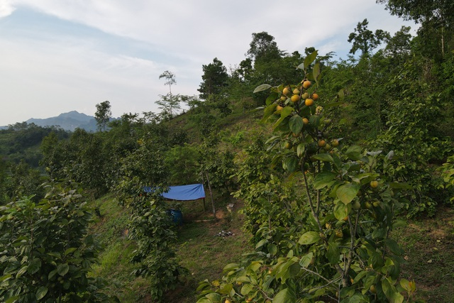 Cảnh thu hoạch hồng vành khuyên trên núi cao vùng biên ải - 9