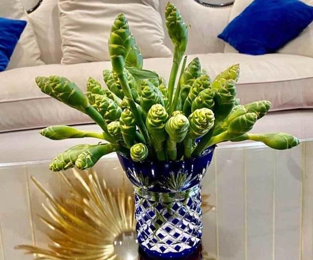 Hoa màu xanh trên núi cao cắm đẹp, ăn ngon: Gom tiền triệu mỗi ngày - 2