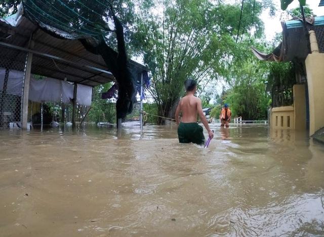 Mưa cực lớn, nước ngập ngang người, cây đổ la liệt - 1