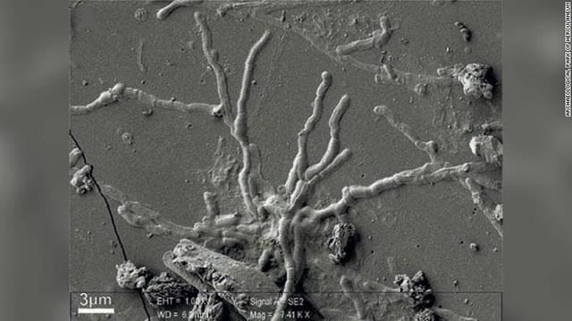 Sọ người gần 2.000 năm đột nhiên lóe sáng, xem kỹ thấy điều bất ngờ - 1