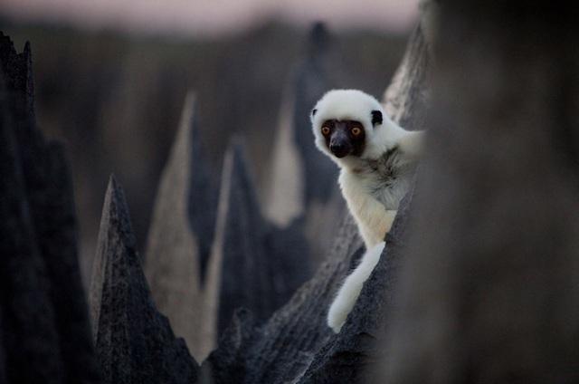 Ớn lạnh khu rừng đá sắc như lưỡi dao – nơi hiểm trở bậc nhất thế giới - 3