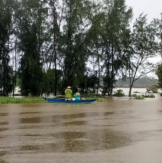 Người dân đổ ra đường giăng lưới bắt cá giữa lũ lớn - 11