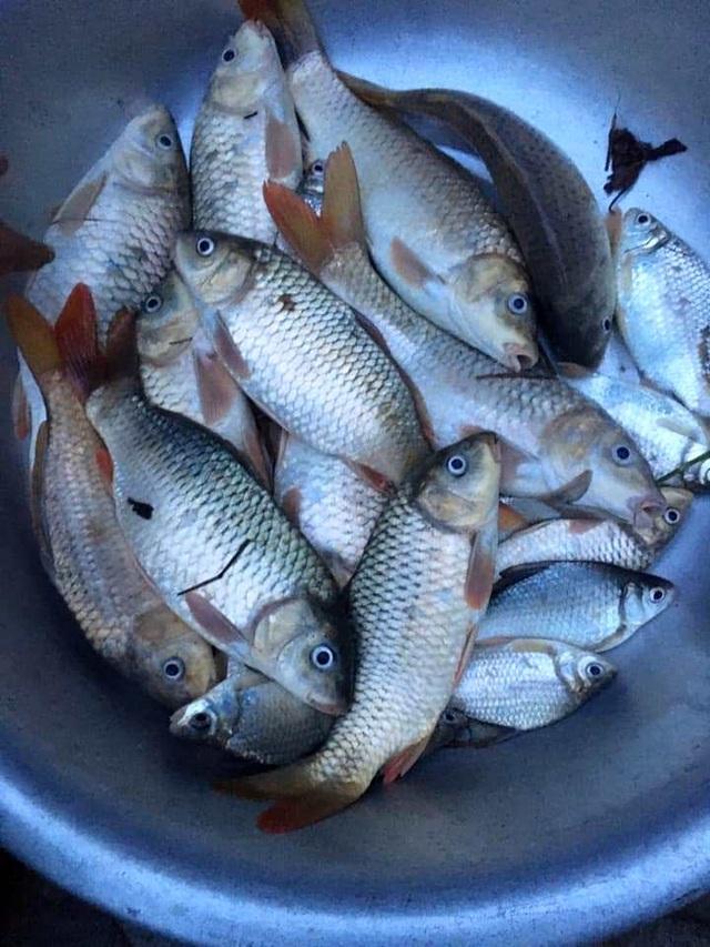 Người dân đổ ra đường giăng lưới bắt cá giữa lũ lớn - 12