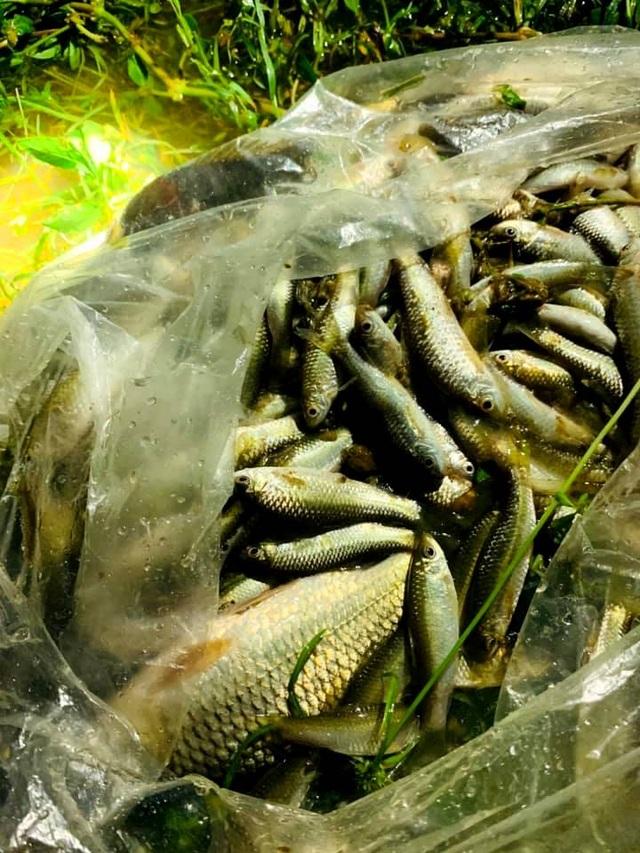 Người dân đổ ra đường giăng lưới bắt cá giữa lũ lớn - 13
