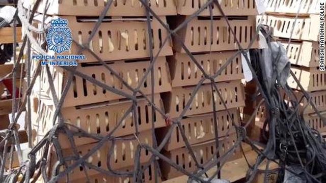 Phát hiện 23.000 gà con chết trong hộp giấy tại sân bay Tây Ban Nha - 2