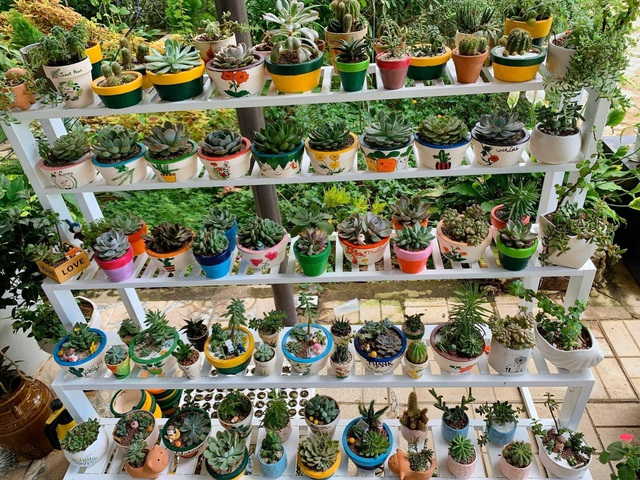 Khu vườn 63m2 với hơn 30 loài hoa đua nhau khoe sắc của mẹ đảm ở Quảng Ngãi - 4