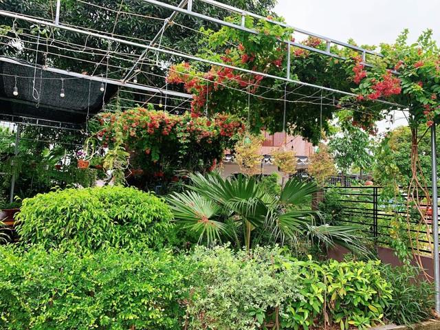 Khu vườn 63m2 với hơn 30 loài hoa đua nhau khoe sắc của mẹ đảm ở Quảng Ngãi - 7