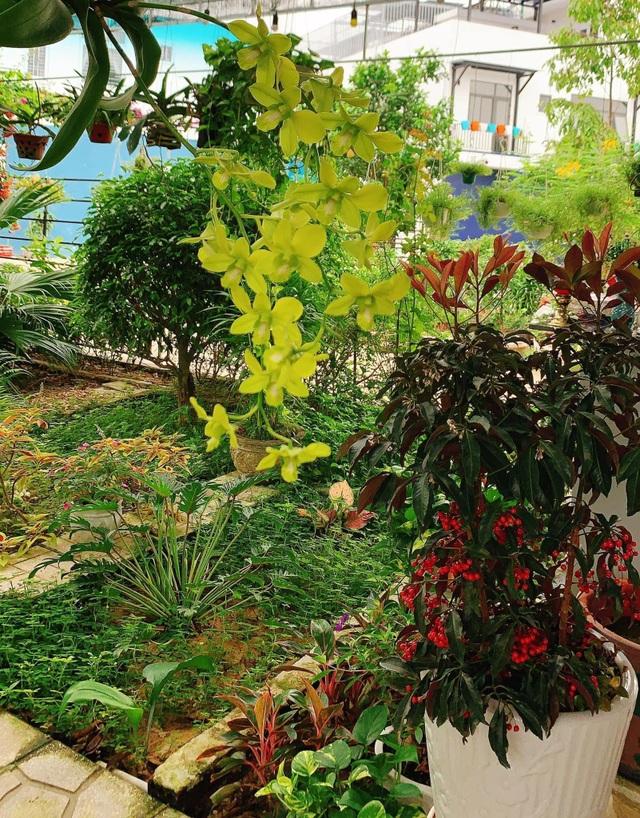 Khu vườn 63m2 với hơn 30 loài hoa đua nhau khoe sắc của mẹ đảm ở Quảng Ngãi - 8