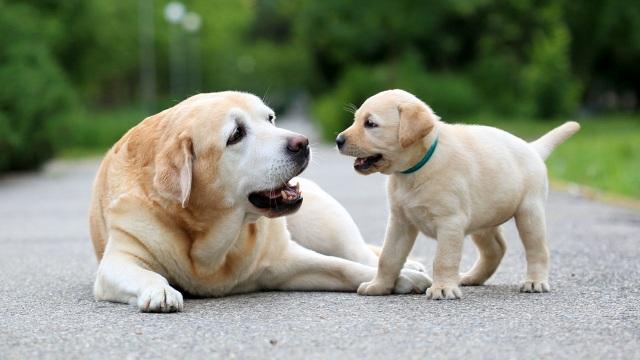 Những sự thật thú vị về loài chó mà có thể bạn chưa biết - 1