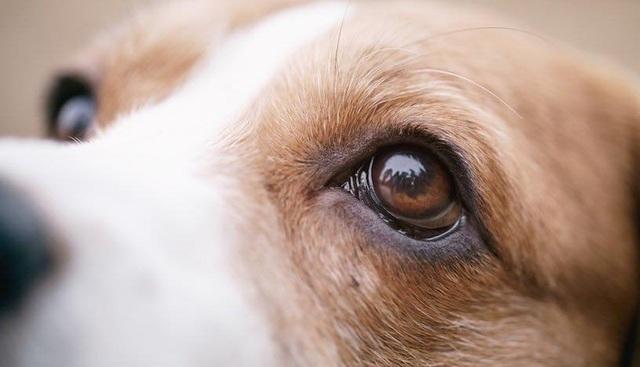 Những sự thật thú vị về loài chó mà có thể bạn chưa biết - 4