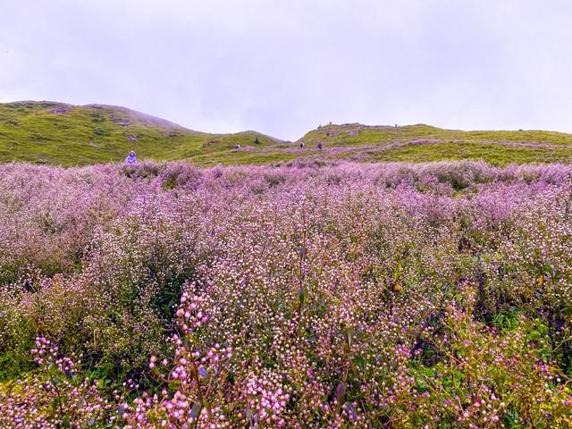 """Săn mây, ngắm hoa chi pâu nở tại """"thiên đường nơi hạ giới"""" Tà Chì Nhù - 10"""