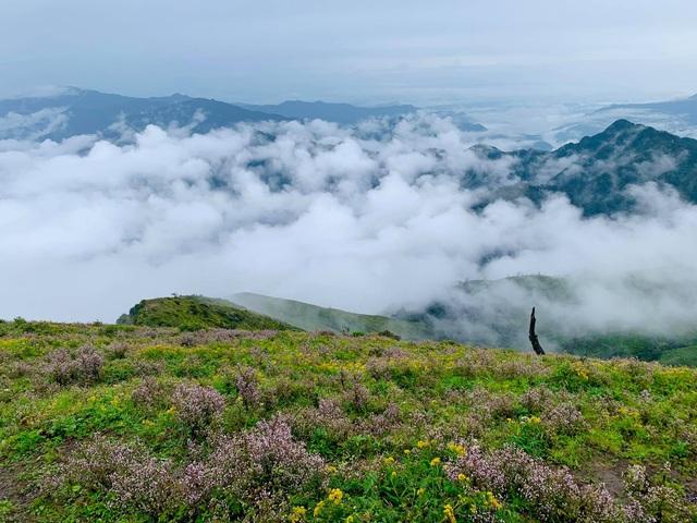 """Săn mây, ngắm hoa chi pâu nở tại """"thiên đường nơi hạ giới"""" Tà Chì Nhù - 13"""