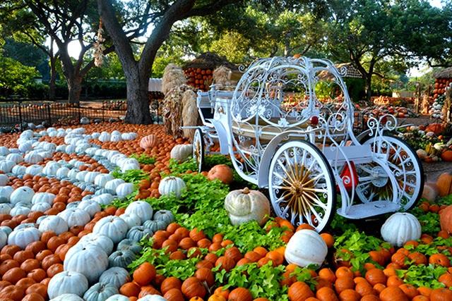 Ngôi làng được làm từ 90.000 quả bí ngô, vào bên trong như vườn cổ tích - 3