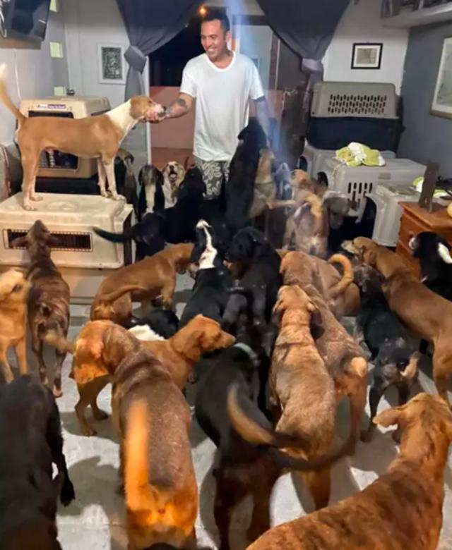 Người hùng cưu mang hàng trăm chú chó hoang trong cơn bão - 3