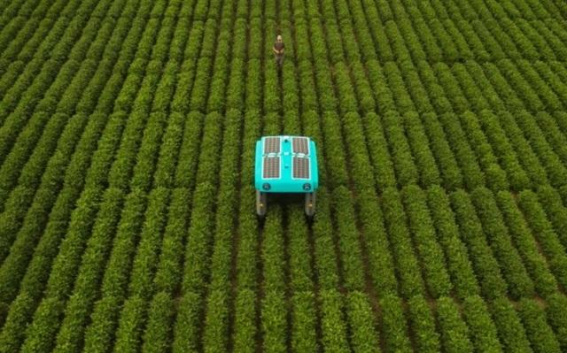 Ngỡ ngàng với khả năng của robot nông nghiệp do Google phát triển - 1