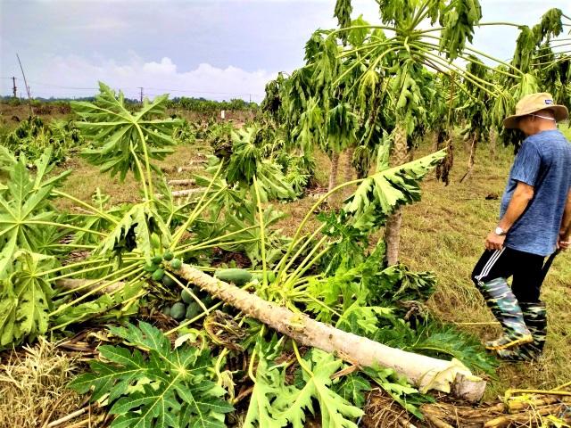 Quặn lòng nhìn những làng rau quả thiệt hại nặng sau mưa lũ - 2