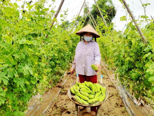 Quặn lòng nhìn những làng rau quả thiệt hại nặng sau mưa lũ - 7