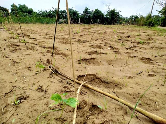 Quặn lòng nhìn những làng rau quả thiệt hại nặng sau mưa lũ - 8
