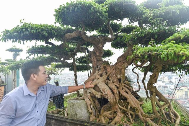 Cây sanh cổ trăm tuổi đắt giá ngang căn chung cư cao cấp ở Hà Nội - 4